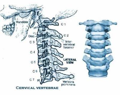 Giornata della postura e mobilità Cervicale