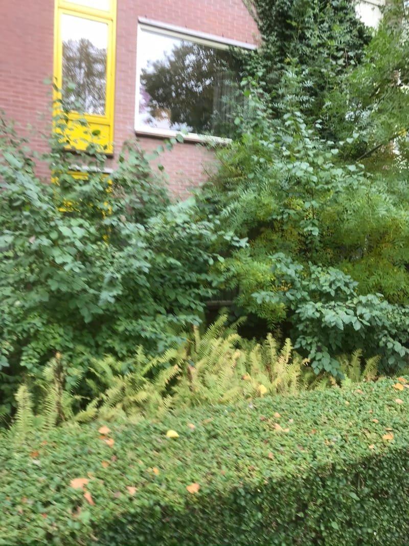 Tuin werkzaamheden