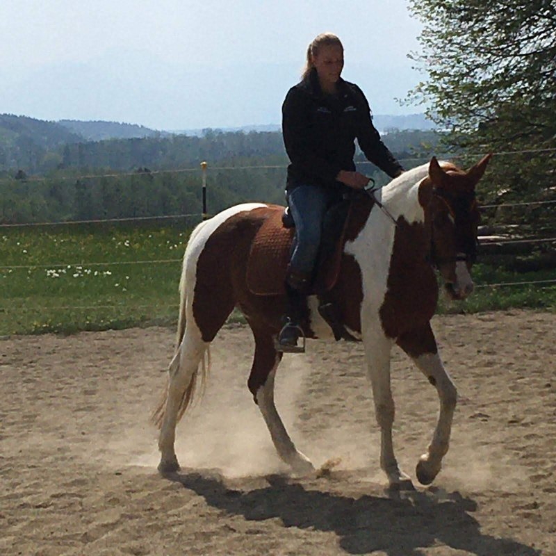 Beritt Ihres Pferdes - Kurse