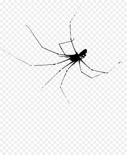 مكافحة العناكب