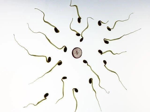 Ayurvedic Fertility