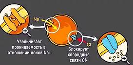 нервная система таракана