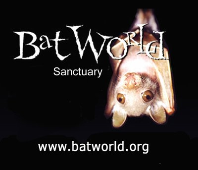 Bat World MidCities