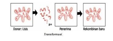 Transformasi Bakteri