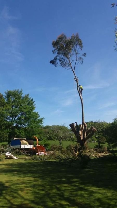 All aspects of tree surgery